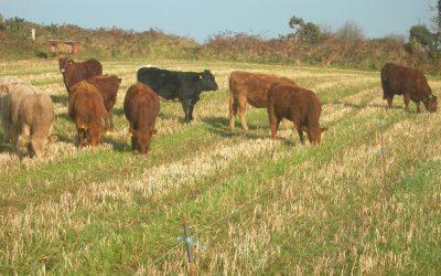 Organic Farming in Ireland
